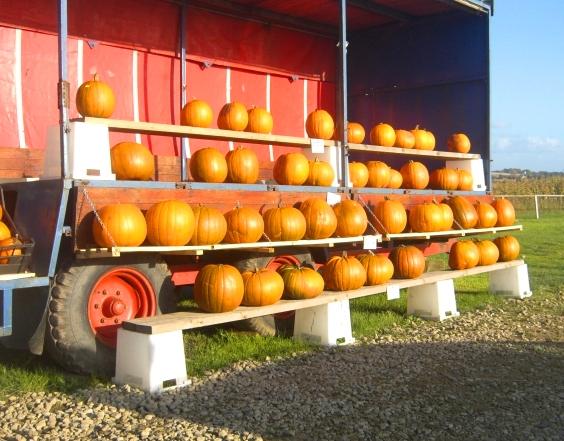 Pumpkinhunt_002