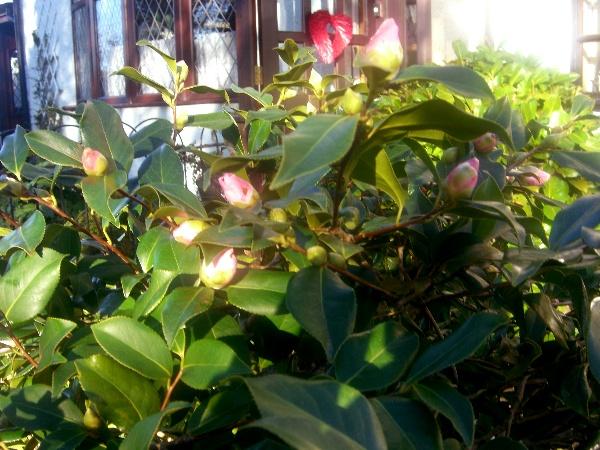 Springgard2